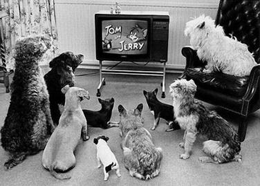 La télé