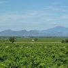 Le Ventoux vu depuis le vignoble de Chateauneuf du Pape