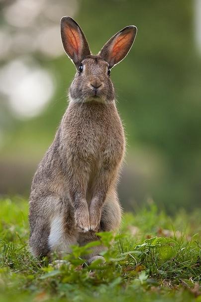 les lapins suite