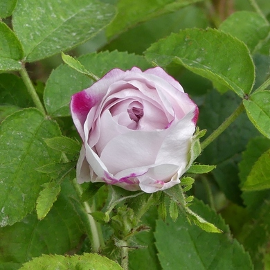 Journées des Plantes de Chantilly : mon panier de printemps...
