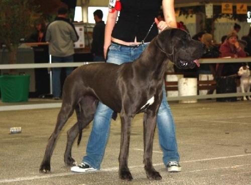"""Exposition canine et mon premier """"trick"""""""