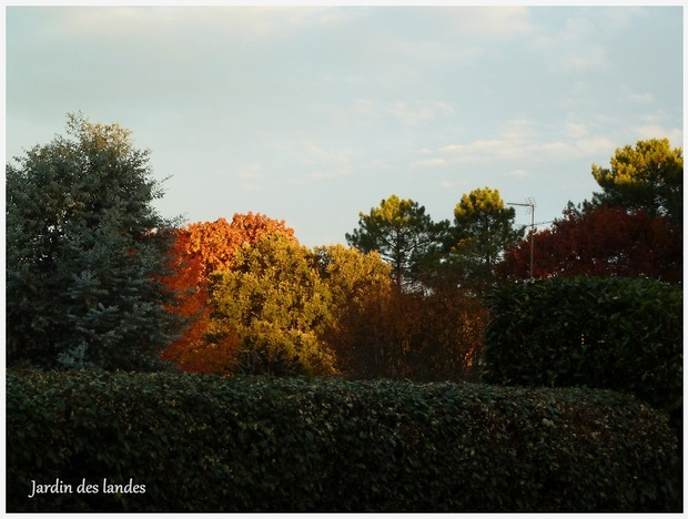 Photos d'automne au jardin.