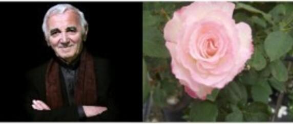 charles&sa rose