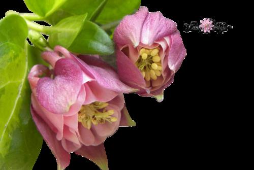 Png virágok saját készítésű 1.