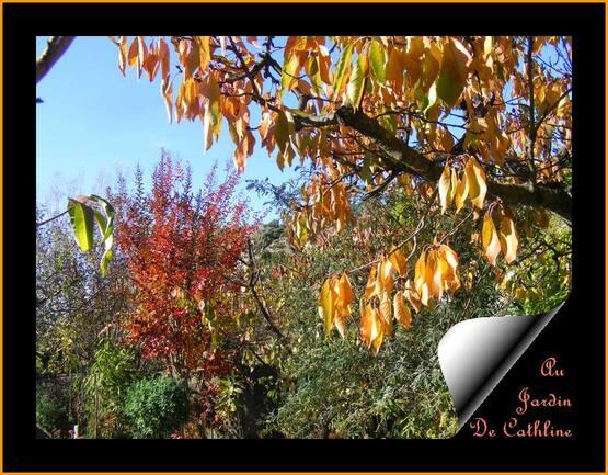 Jardiner avec la Lune du 11 au 30 Novembre