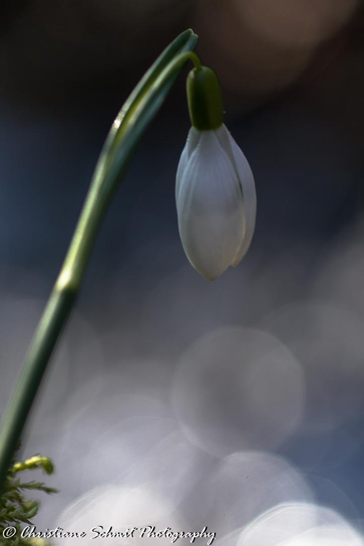 Le printemps autrement ....(1)