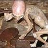 Bébé alien mexicain