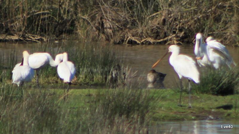Le parc ornithologique du teich. (gironde)