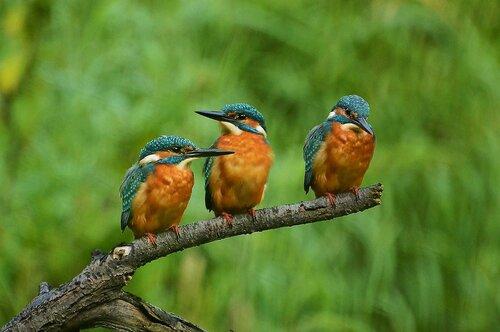 Martin Pêcheur Nature Direction - Photo gratuite sur Pixabay