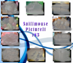 PictureIt 183 - Sniffmouse
