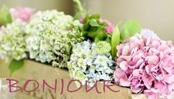 Les Hortensias ! cartonnettes