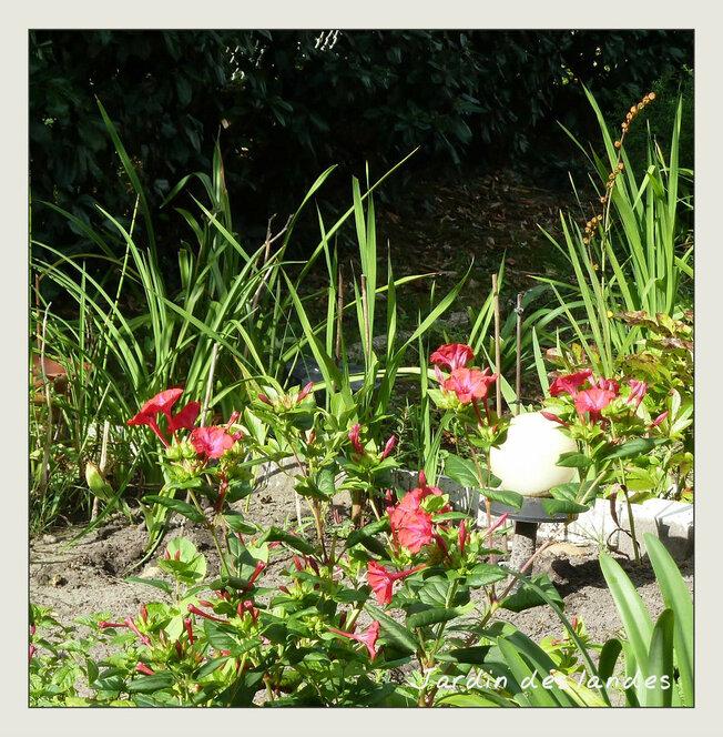 Quelques photos du jardin - Aout 2018