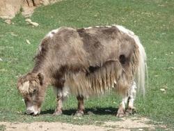 Janine en Mongolie