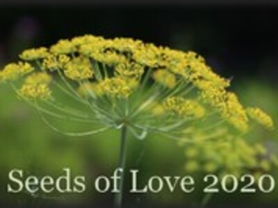 Seeds of Love 2020