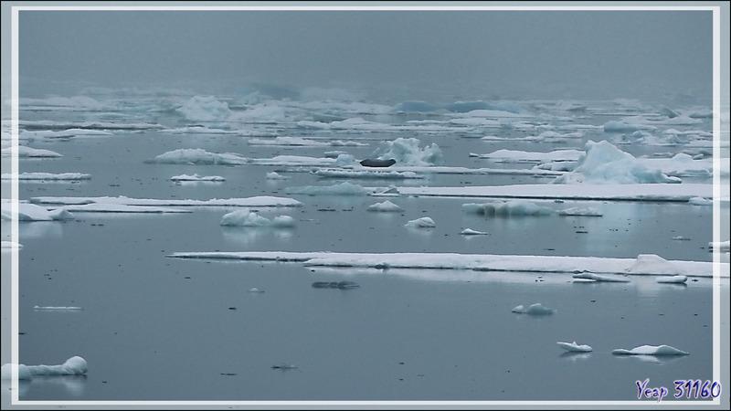 Derniers émerveillements dans la Mer des Tchouktches - Alaska