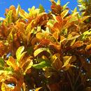 Massif aux couleurs éclatantes - Photo : Karin