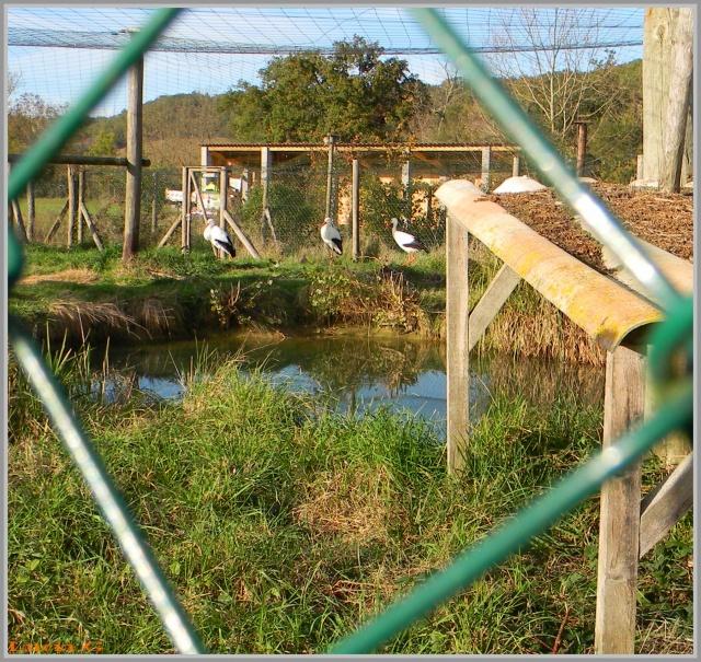 Domaines des Oiseaux (09)