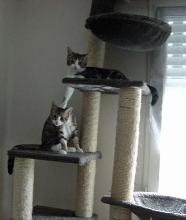 Toujours à l'adoption : THELMA et le duo FICELLE & KATSOU