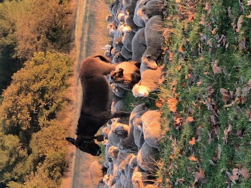 Charles et son agneau