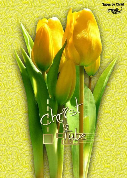 Tulipes Jaunes 2