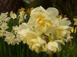 Ploubazlanec mars 2011 018