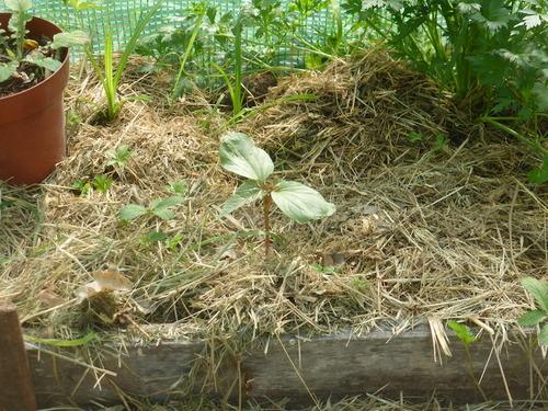 - Petites niouzes du jardin de pinson -