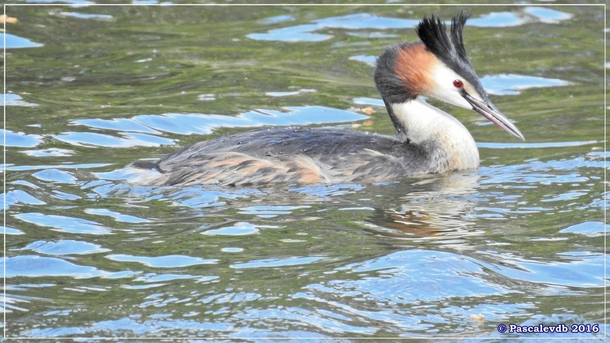 Sur le sentier du littoral au Teich - Avril 2016 - 2/2