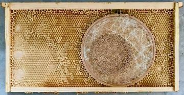 Les abeilles comme support artistique ...