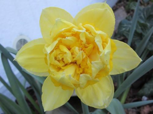 Quelques fleurs printanières (2)