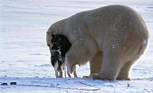 ours-calin-chien-noir-1.jpg