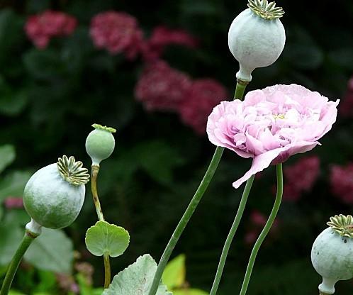 fleurs du jardin en juin juillet le nouveau blog de shuki. Black Bedroom Furniture Sets. Home Design Ideas