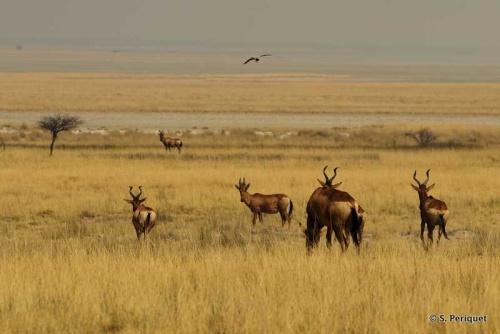 Namibia Way of Wildlife - Etosha NP