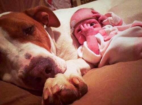 (-*♥*-) Un chien adopté tombe amoureux de sa petite soeur humaine avant même de la rencontrer