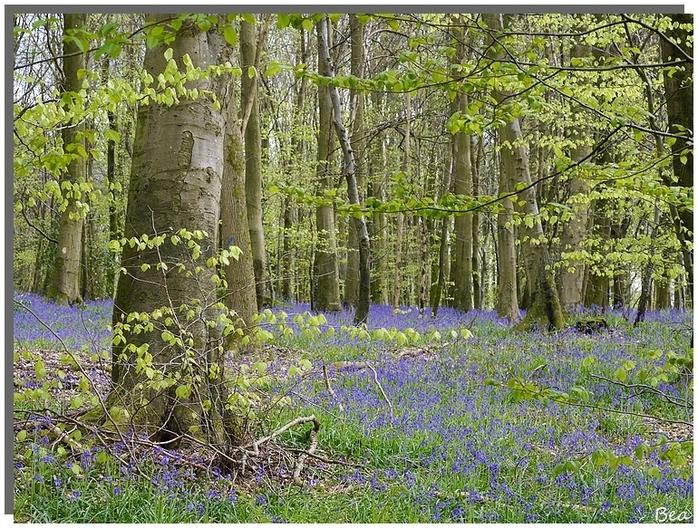 La forêt en couleur