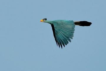 L'oiseau solitaire ...
