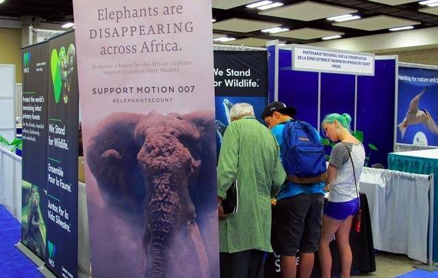 Appel à mettre fin au commerce légal d'ivoire