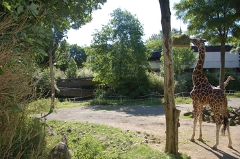 Zoo Duisburg 2012 601
