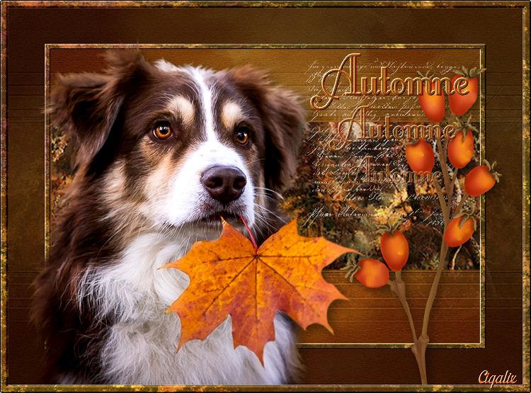 Animaux automne