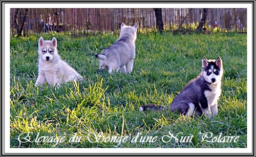 Le Husky en chanson (17 mars 2013)