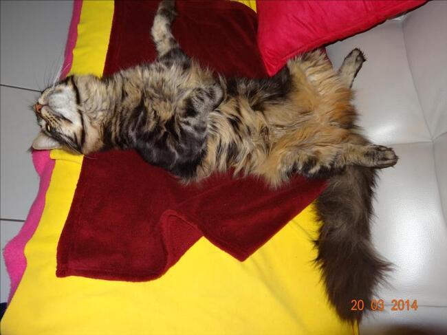 Ingo à la sieste