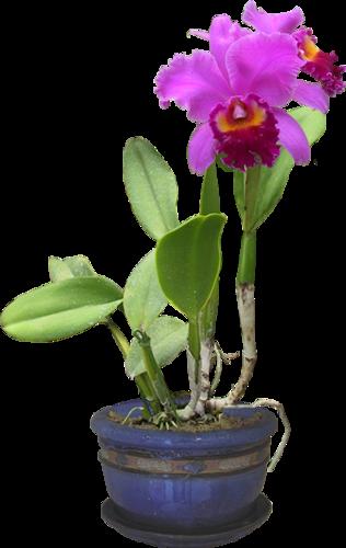 Fleurs en Pot Série 7