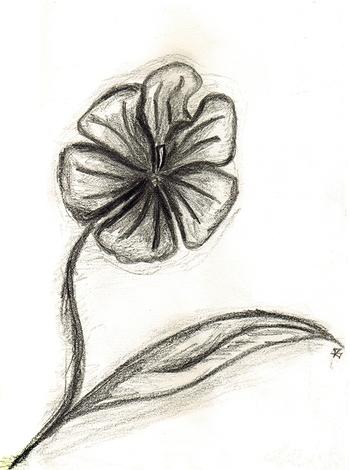 Fleur A5 -1fév08-