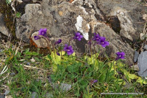 Grassettes aux Gloriettes (2)