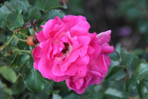 Jardin d'Estelle 2013 4578
