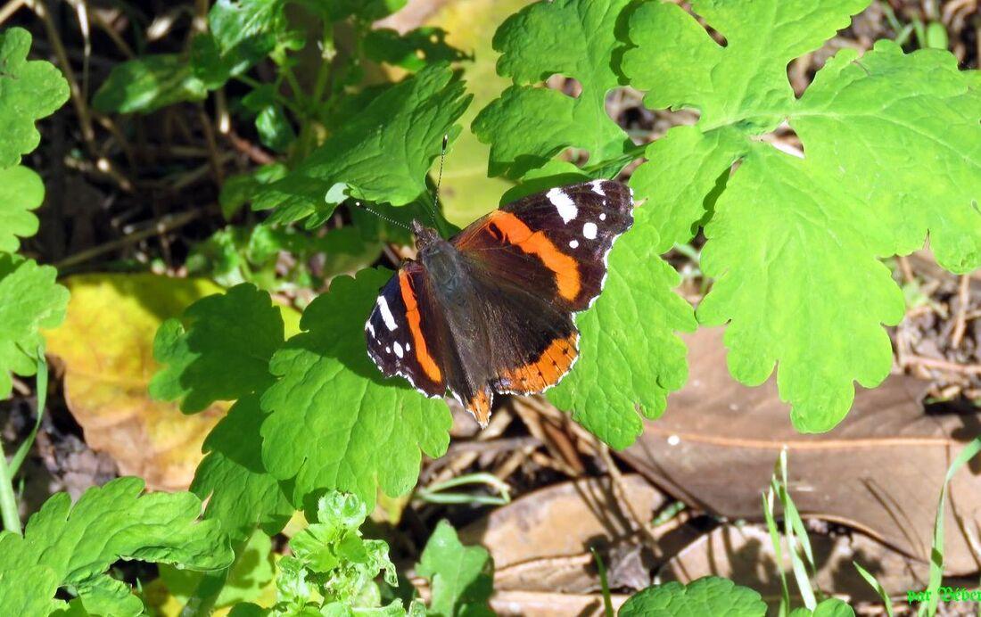 un papillon en Octobre