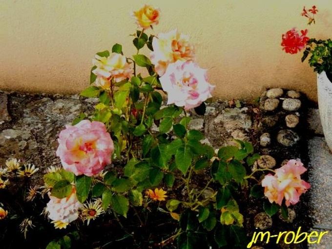 Jardin .Un petit tour le matin au milieu des fleurs