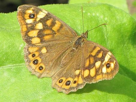 les-papillons-6451.JPG