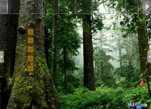 Jouer à Point and click escape - Forest