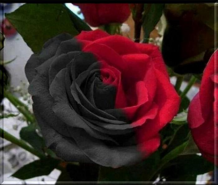 Une couleur une fleur.
