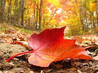 Les feuilles d'automne ...